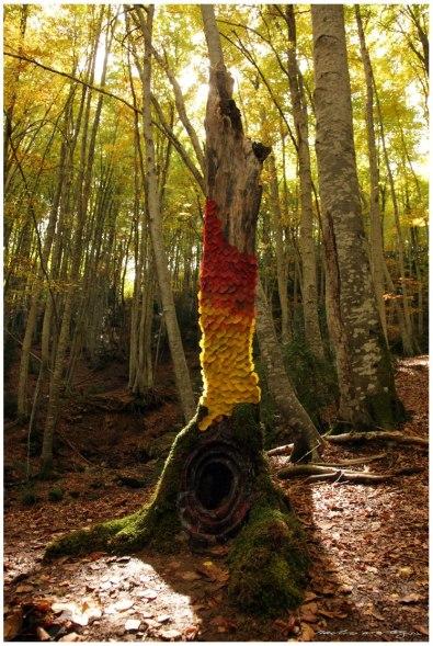 Bosque Betato II (Copy)