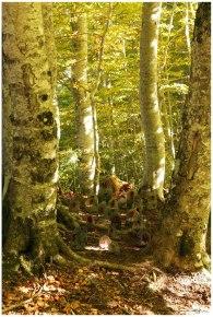 Bosque Betato VI (Copy)