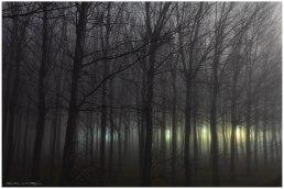 CHOPERAS INVIERNO niebla (Copy)