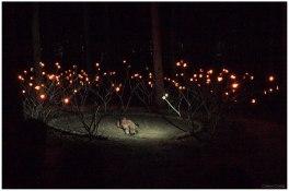 La corona de las luciérnagas 4 (Copy)